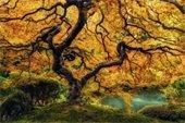 Bob Coorsen - Tree Pic